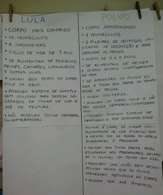polvolula (4)