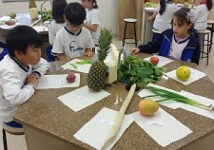 Identificando as partes da planta nos alimentos