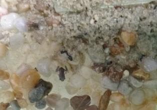 Infantil III observa as transformações dos girinos em sala de aula